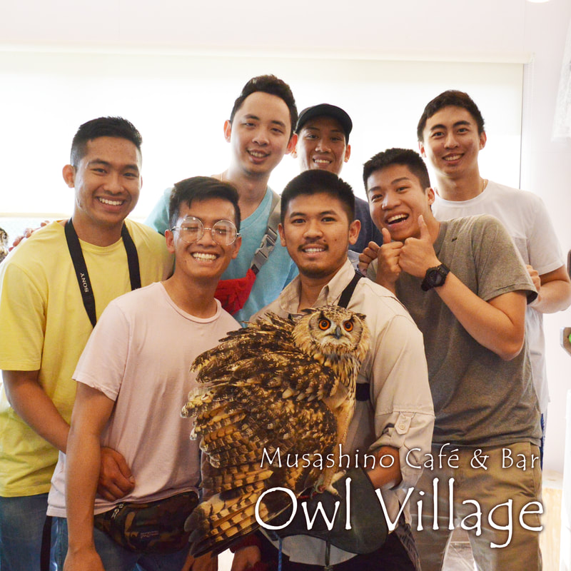 owlcafe harajuku Singaporean friends play with owls