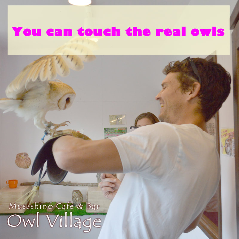 owl cafe harajuku about us to touch the real owls